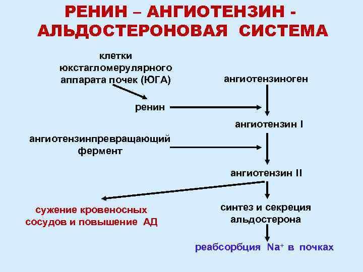 ренин-агиотензин