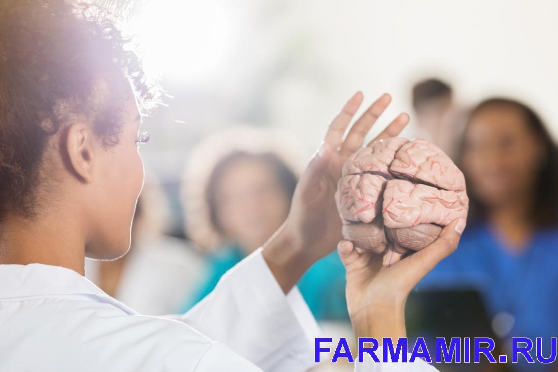врач показывает головной мозг человека