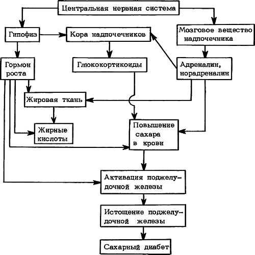 работа центральной нервной системы